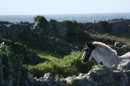 horse-ireland